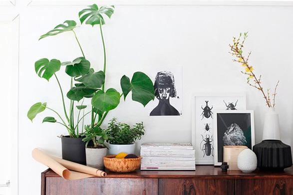 how-to-indoor-plants-130612-2-1